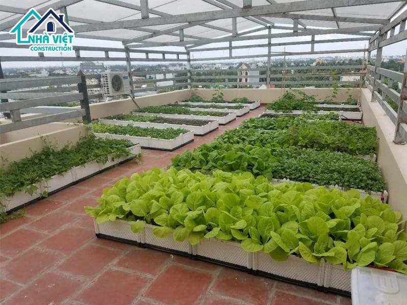 top 5 nhom cay phu hop trong tren san thuong 2 - Top 5 nhóm cây phù hợp trồng trên sân thượng