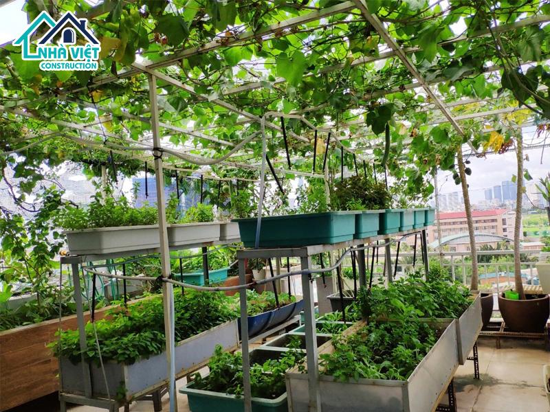 top 5 nhom cay phu hop trong tren san thuong 5 - Top 5 nhóm cây phù hợp trồng trên sân thượng