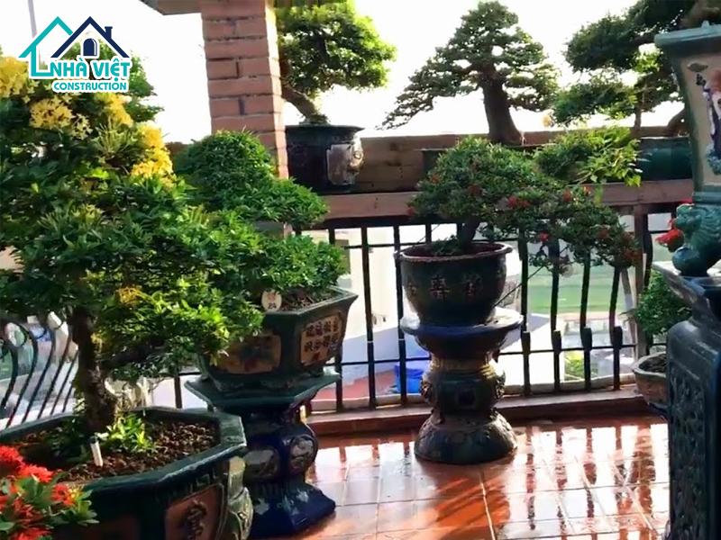top 5 nhom cay phu hop trong tren san thuong 6 - Top 5 nhóm cây phù hợp trồng trên sân thượng