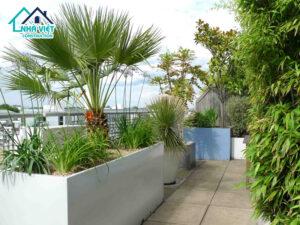 Top 5 nhóm cây phù hợp trồng trên sân thượng